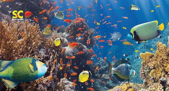 Coral Fish - MT5073