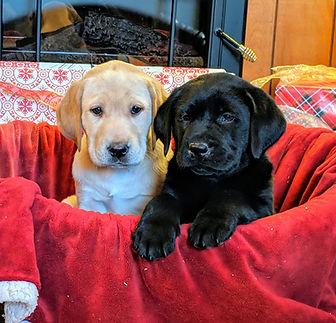 fern puppys.jpg