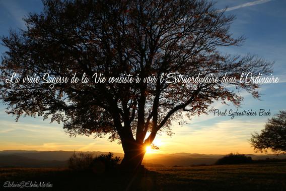 La vraie sagesse de la vie consiste à voir l'extraordinaire dans l'ordinaire-Elolavie