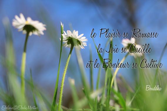 Le plaisir se ramasse, la joie se cueille et le bonheur se cultive-Elolavie