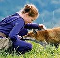le renard et l'enfant.jpeg