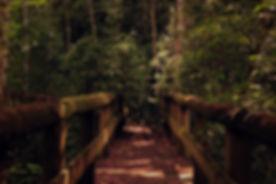 pexels-photo-236412.jpeg