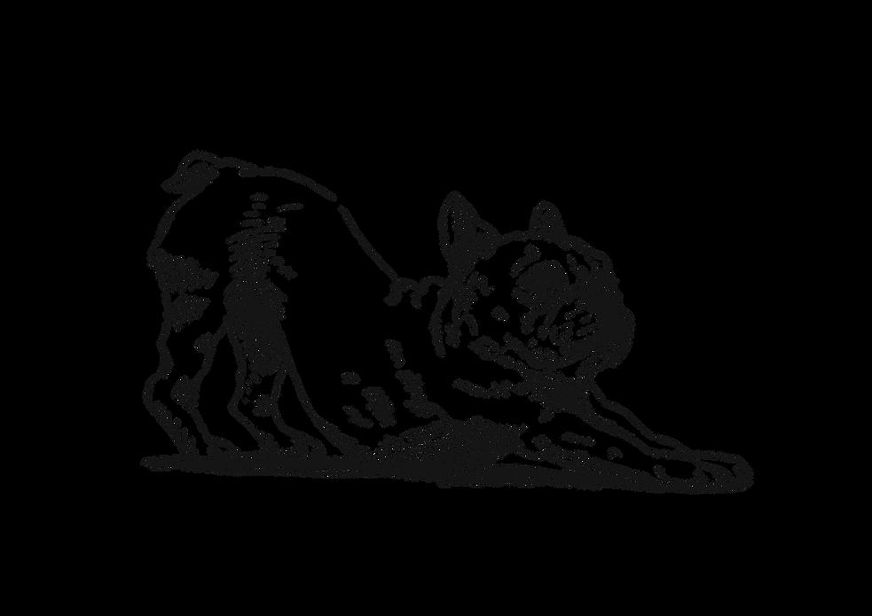 ストレッチ,岐阜県,関市,首こり,肩こり,腰痛,ボイスケア,筋トレ,のど,歌,カラオケ,ボイトレ,ボーカル,声楽,音楽,歌手,声優,アナウンサー,司会