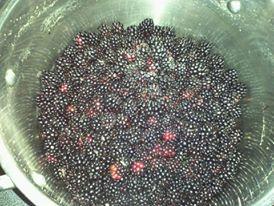 Those awful, wonderful, nourishing weeds: Blackberries