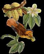 Kolibri 2.png