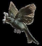 Kolibri 3.png