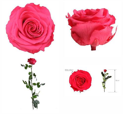 Rose à tige Premium Rose foncé