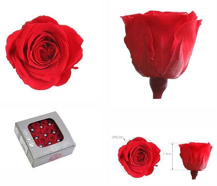 16 Roses Princess Rouge