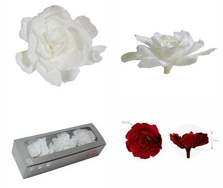 5 Boîtes de Gardénias Blanc