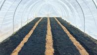 Urban Farming Stadabruk Suéde