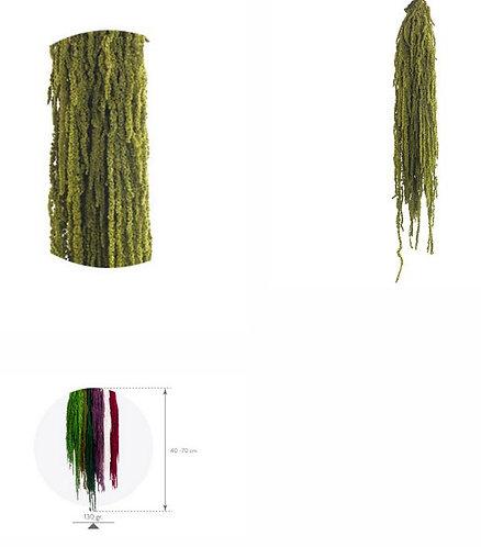 Amaranthus Amande verte 132g