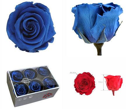 6 Roses Standard Bleu foncé