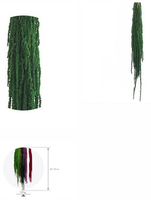 Amaranthus Vert 132g
