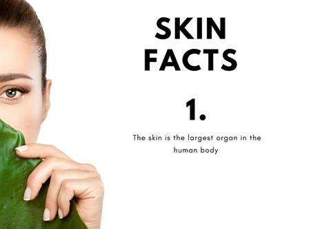 Skin Myths - Fact or Fiction?