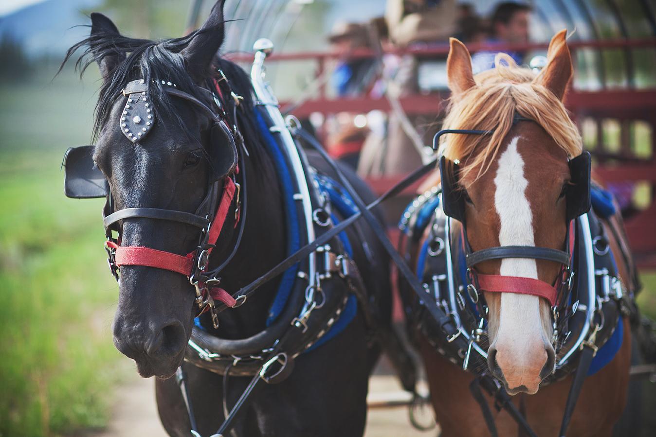 equine lifestyle photography