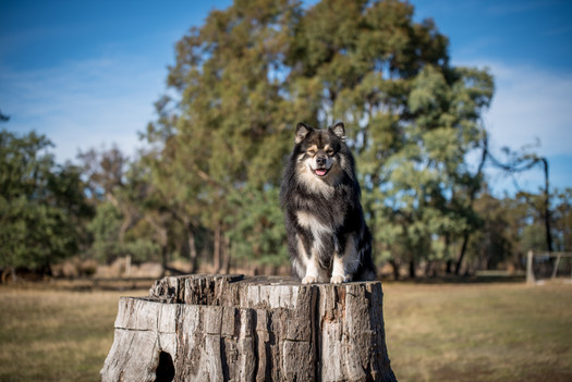Shy Wolf Photography