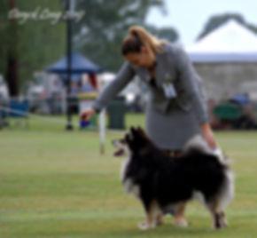 Jager First Puppy Dog FLCNSW_edited.jpg