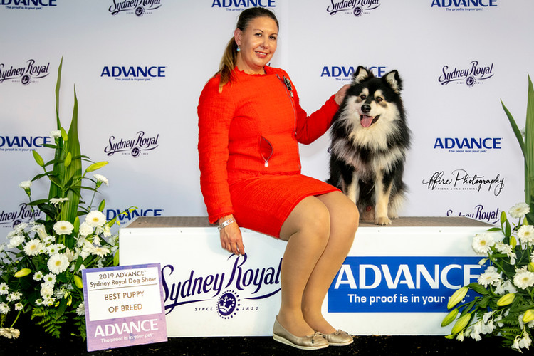 Puppy of Breed + Final 4 Puppy in Group - Sydney Royal 2019