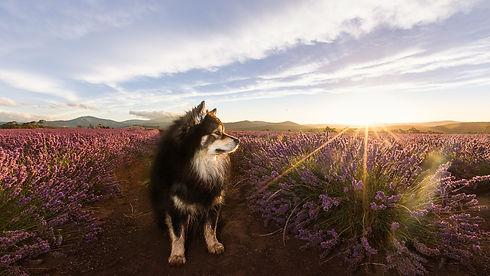 puppytalesphotography_benni-2.jpg