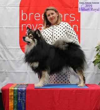 Best of Breed - Hobart Royal 2019