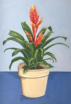 Bromeliad, 2020
