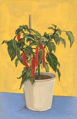 Chilli Plant, 2020