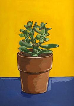 A Tesco's Finest Succulent, 2020