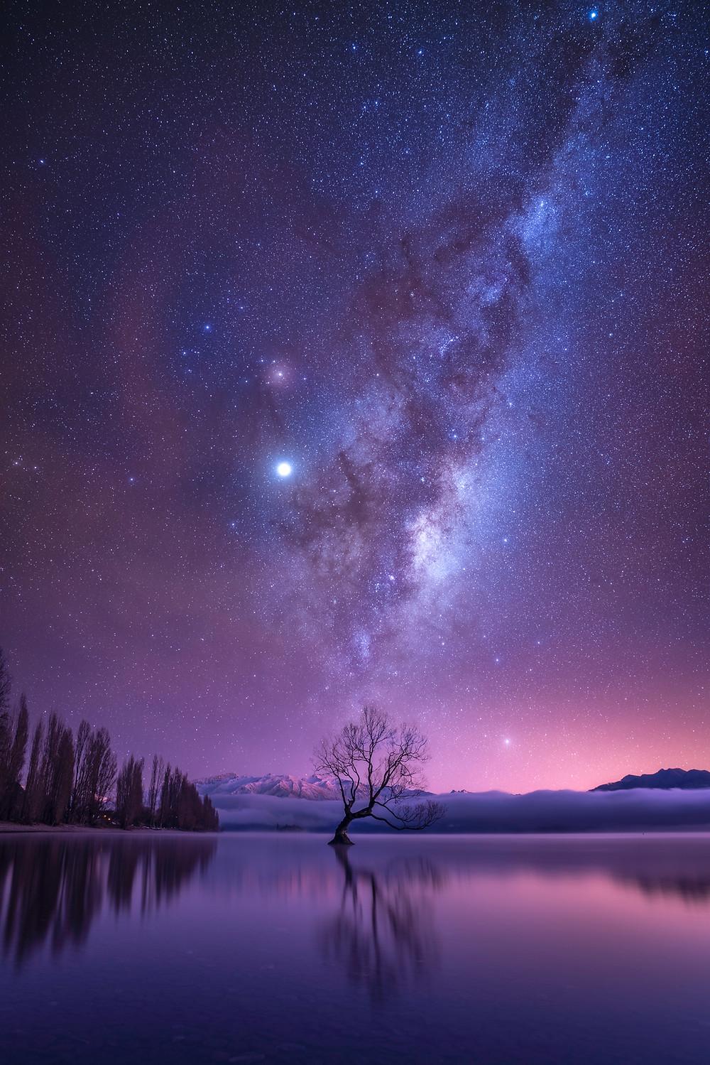 Wanaka Tree in New Zealand with Milky Way