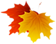Herbstblätter.tif