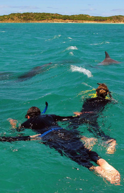 132963 Swimming with Dolphins, Rockingham, WA