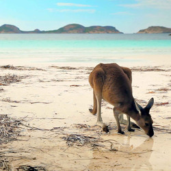 132950 Lucky Bay, Cape Le Grand National Park, WA