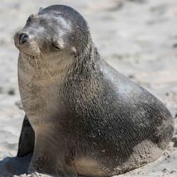 131627 Seal Bay, Kangaroo Island, SA