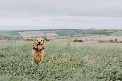 1_Cotswolds_Wedding_Country_Dog.jpg