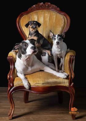 Royal Pups