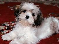 small dog2.jpg