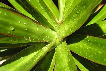 Succulent 6 x 4.jpg