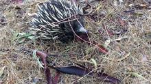 Australian Wildlife so far!