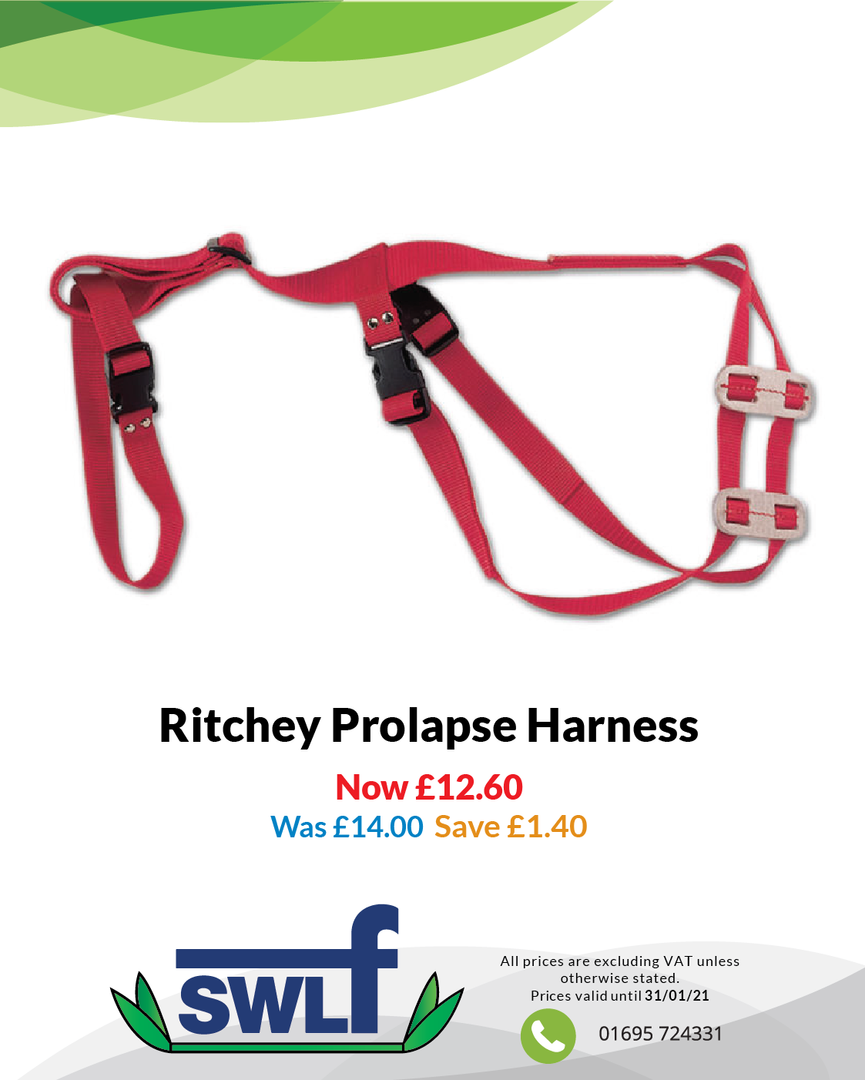 Ritchey Prolapse Harness-01.png