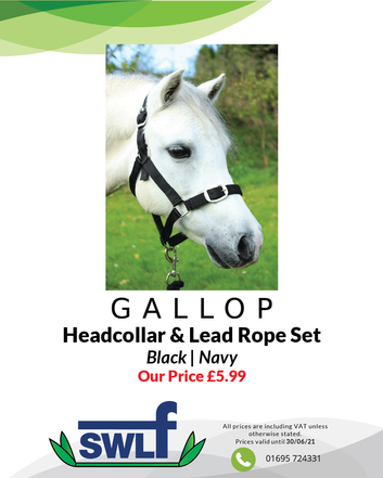 Gallop Headcollar & Lead Rope-01.png