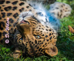 Jaguar - This is my Best Side