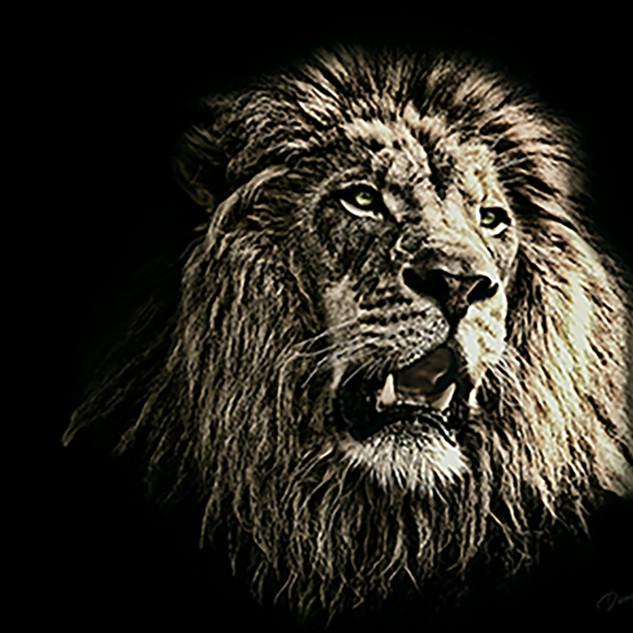 The King Black & White