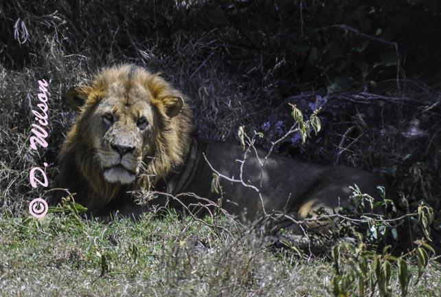 A Moment of Solitude - Kenya, Africa