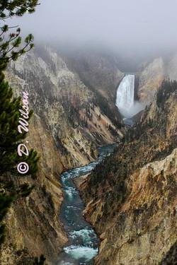 Yellowstone Lower Falls 1, Wy