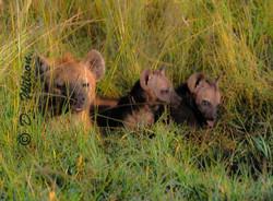 Manny, Mo, and Jack - Kenya, Africa