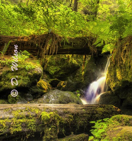 Trillium Falls 3, Orick,Ca