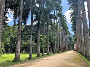 Jardim Botânico do Rio de Janeiro: tudo o que você precisa saber antes de visitar