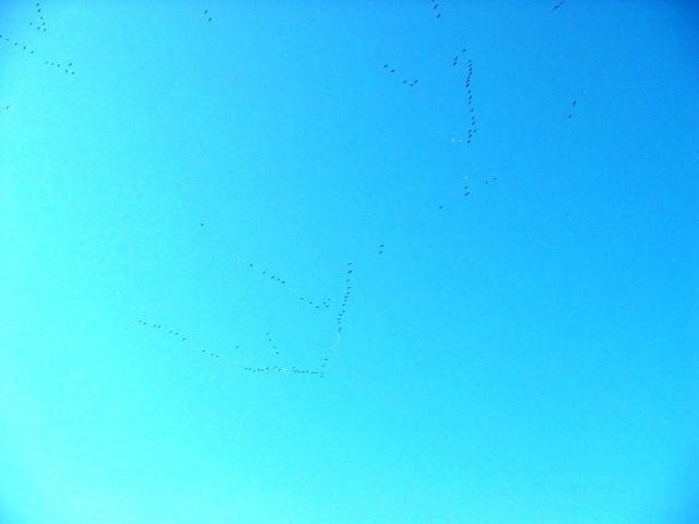 Geese-08.jpg