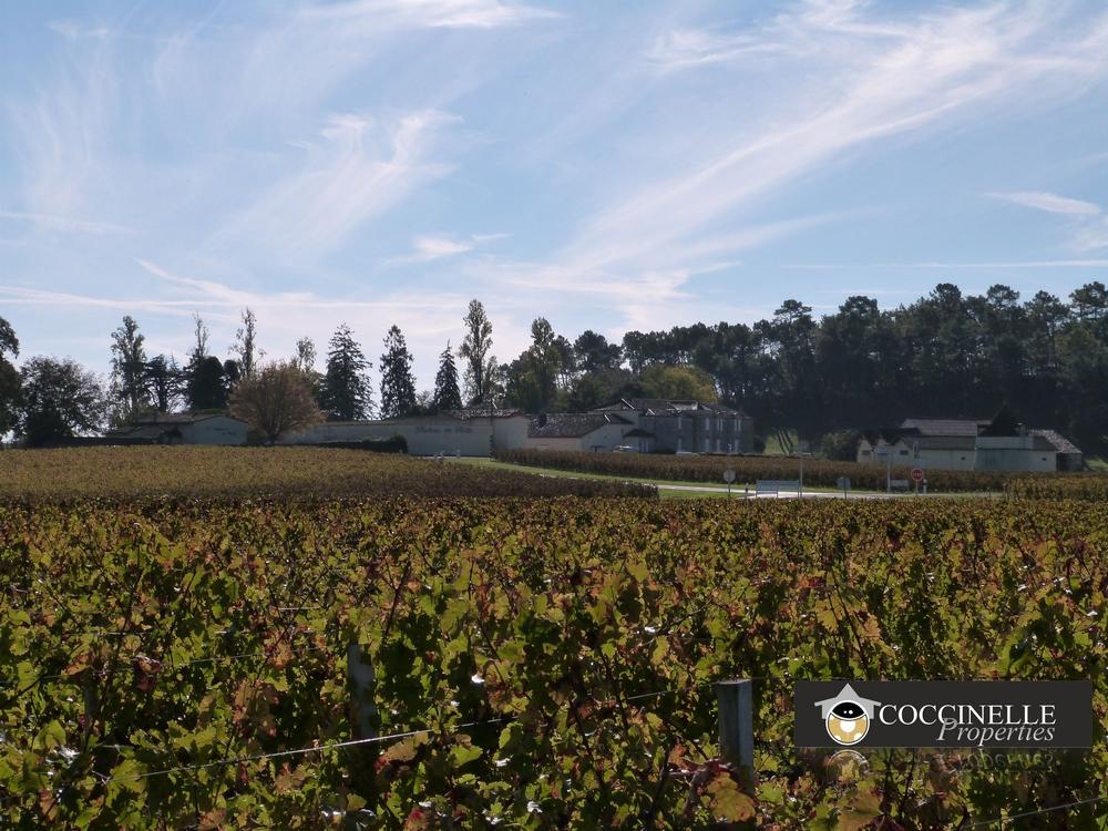 propriété viticole à vendre.jpg