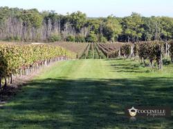 domaine_viticole_à_vendre.jpg