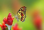 butterfly-on-flowers .jpg